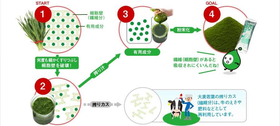 START 1.何度も細かくすりつぶし 細胞壁を破壊! 2.搾り汁 3.有用成分 GOAL 4.粉末化  大麦若葉の搾りカス (繊維分)は、牛のえさや 肥料などとして 再利用しています。